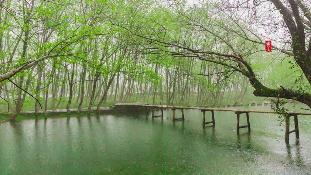 壁纸 垂柳 风景 柳树 摄影 树 桌面 1024_576