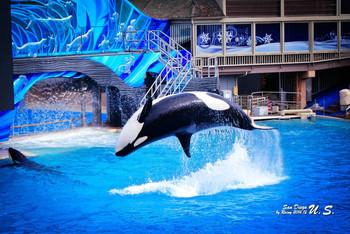 壁纸 动物 海底 海底世界 海洋馆 鲸鱼 水族馆 350_234