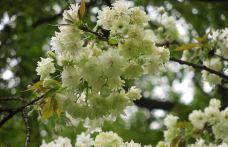 南山植物园-重庆-159****4166
