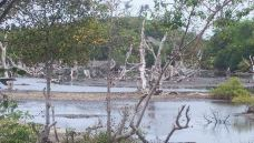 死亡森林-长滩岛-小蹄膀
