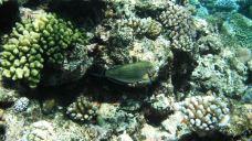 大堡礁-昆士兰-clara0403
